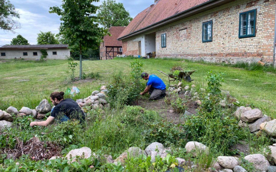 Ökologischer Pflanzenschutz im Gemüsegarten